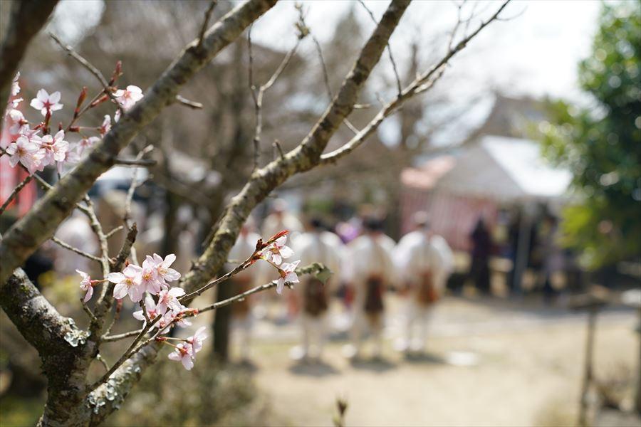 石峯寺 桜